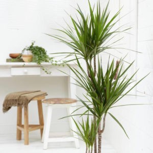 Homy Jungle: plantas inteligentes que se comunican con sus dueños